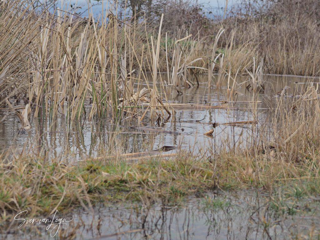 Drover Heide