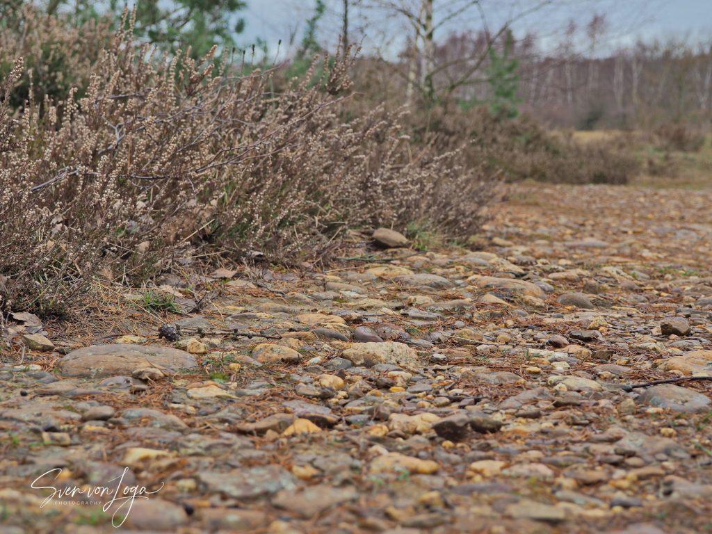 Rheinschotter in der Drover Heide