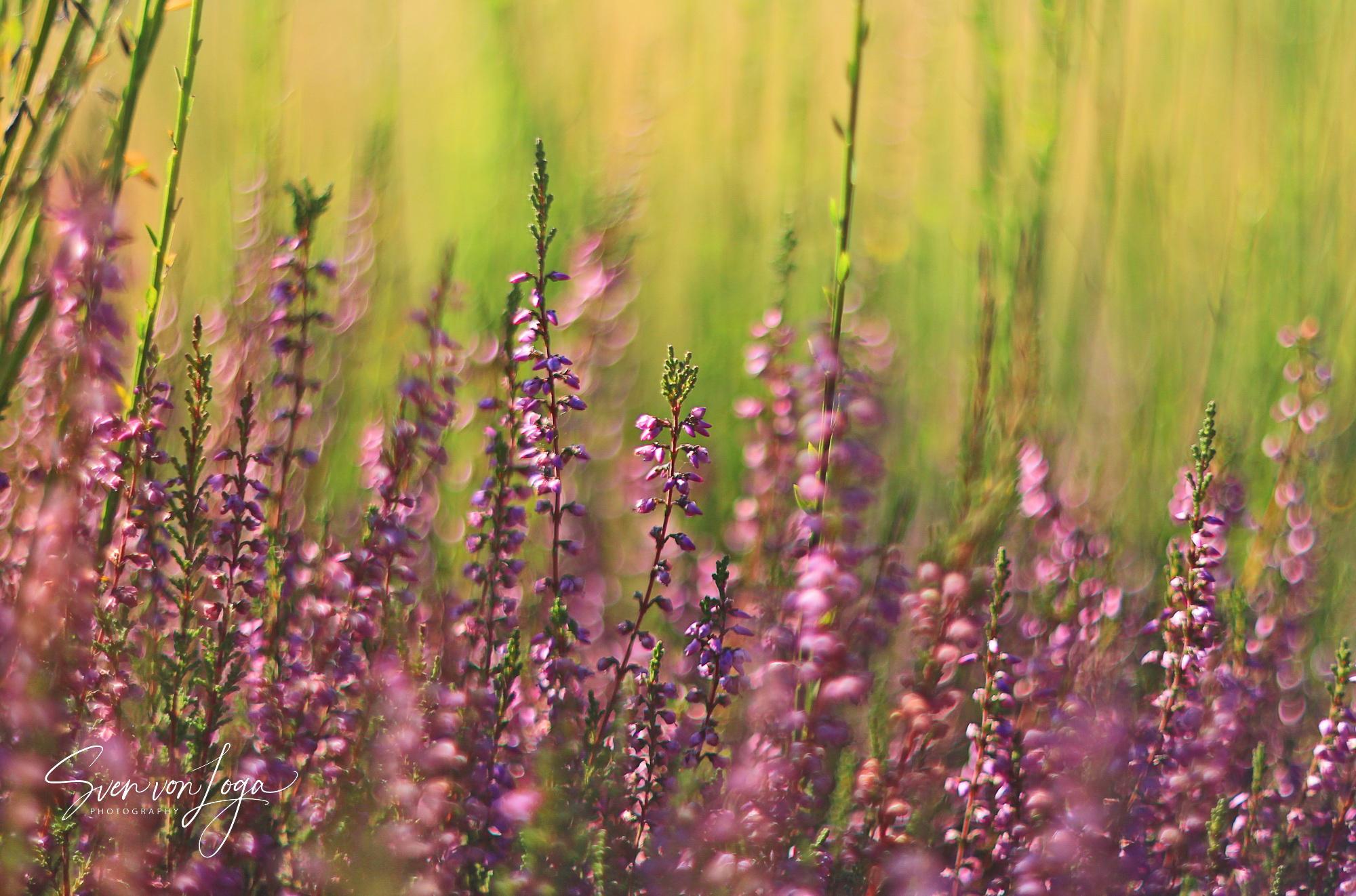 Highlights der Wahner Heide – der Film